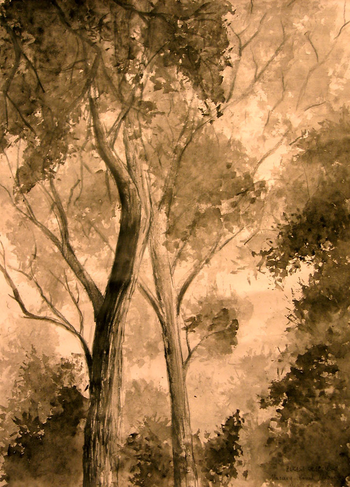 TREES / drzewa